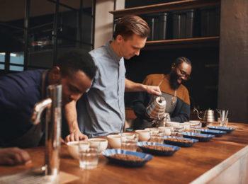classificação do café